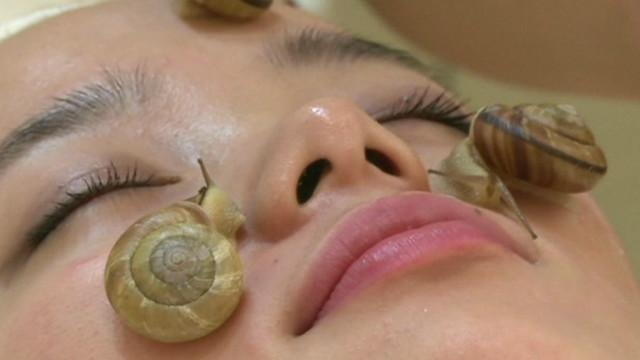 snail-222