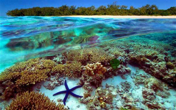 Голям бариерен риф австралия