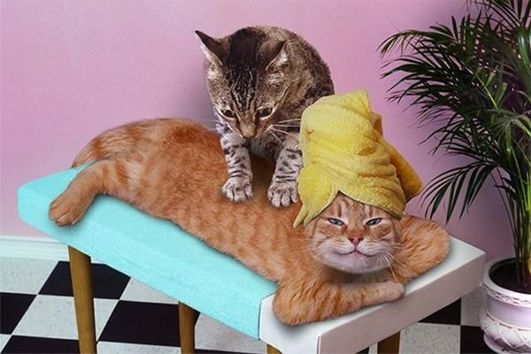 Отглеждане на котки