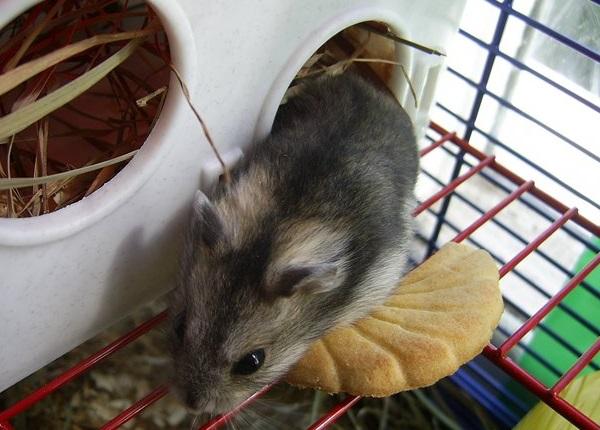 Colivie pentru un hamster