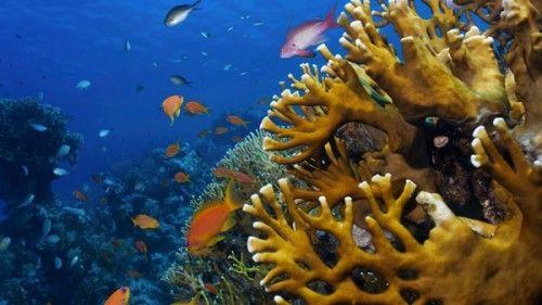 Reef-Japanese-Gardens-Aqaba-Jordan-