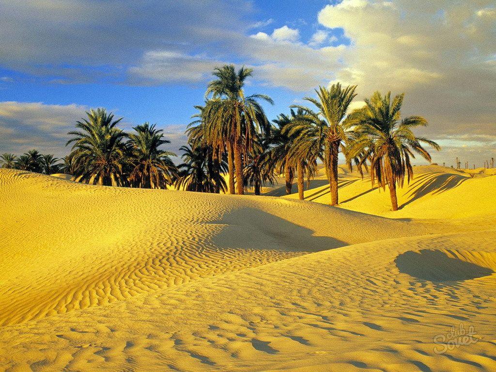 Почивка в Тунис. Къде да почивате в Тунис